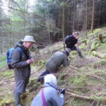 Searching for Sematophyllum among the conifer logs